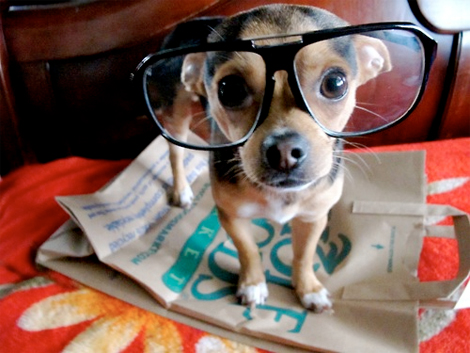 Hipster Puppies on Hipster Puppies 4